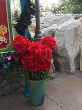 Mickey Roses